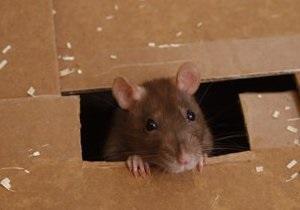 В жилых домах Киева не нашли мышей и крыс