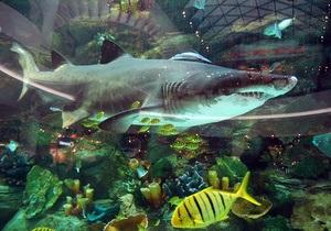 Акула из столичного ТРЦ завела аккаунт в Twitter