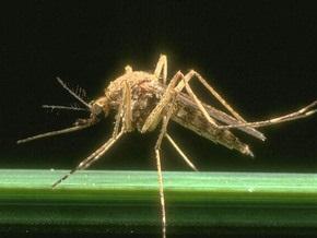 Шведы боятся выходить на улицы из-за нашествия комаров