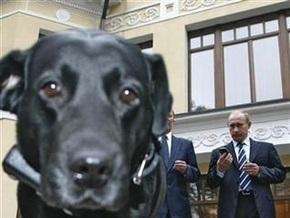Собака Путина съела еду из тарелок единороссов
