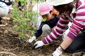 Panasonic объявляет конкурс детских экологических проектов.