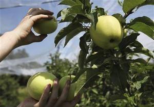 і: Украина вошла в четверку крупнейших поставщиков яблок на рынок России