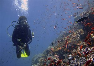 Власти ищут инвестора для строительства океанариума в Киевском зоопарке