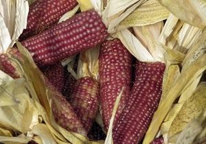 Украина готовится к экспорту кукурузы в  США