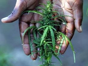 У 114-летнего нигерийца изъяли 100 мешков марихуаны