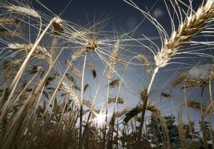 Британские ученые расшифровали геном пшеницы
