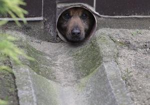 В Киеве бродячий пес стал причиной ДТП