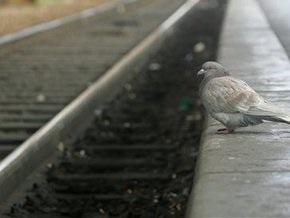 В Кабмине требуют приостановить реконструкцию линии скоростного трамвая в Киеве
