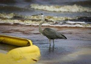 Нефть из Мексиканского залива попала в болота штата Миссисипи