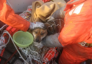 Спасенный в Японии пес нашел своего хозяина