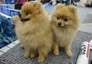 Фотогалерея: Главная украинская выставка собак 2009 года