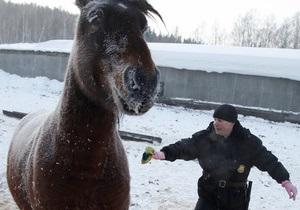 В Петербурге гаишники отловили семь лошадей