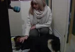 Киевские волонтеры заявляют о новых отравлениях бездомных собак