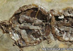 Найдены окаменелости черепах, умерших во время секса