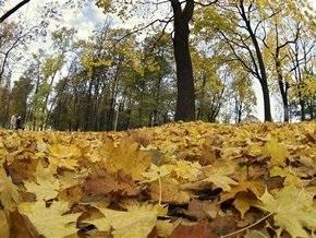 СМИ: Киевские дома хотят отапливать опавшими листьями
