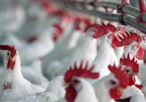 АМКУ намерен ограничить рост цен на курятину