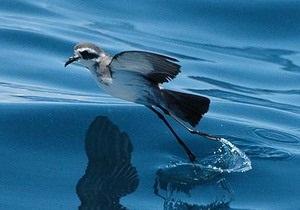 Некоторым птицам не нравится запах родственников - ученые