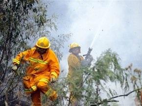 Жертвами лесных пожаров в Австралии стали 209 человек