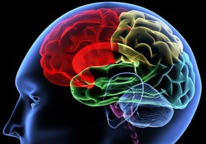 Ученые исследовали процесс стирания свежей информации в мозгу