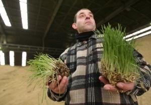 Продление квот на экспорт снизит цены на зерно на 15-20% - мнение