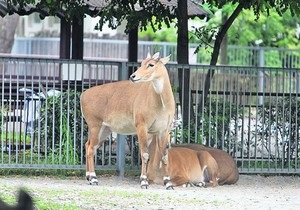В одесском зоопарке дерево упало на клетку антилопы