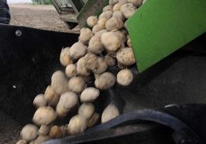 В результате ДТП в Киеве на дорогу высыпалось полтонны картошки