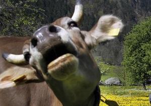 Немецкая школьница научила корову прыгать через преграды