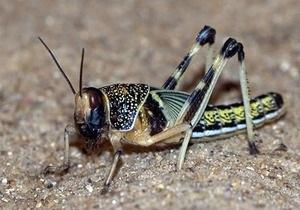 На Кипре травля насекомых парализовала работу гостелеканала