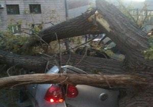 новости Луганска - В Луганске упавшее дерево разбило три машины
