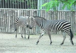 В киевском зоопарке умерли олень и зебра