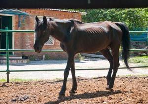 Защитники природы: В конной милиции на острове Хортица лошади умирают от голода
