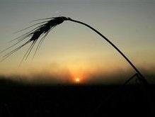 Корреспондент: Кто выиграет от рекордного урожая зерна?