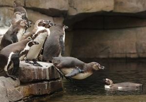 Немецкий зоопарк ищет опекунов для своих питомцев