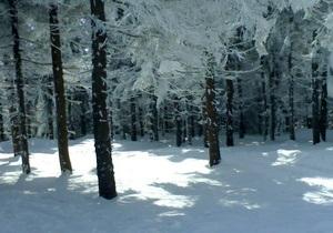 МЧС предупреждает об опасности схождения снежных лавин в Карпатах