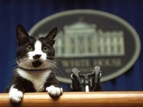 В одной из ветеринарных клиник Голливуда усыпили знаменитого кота четы Клинтон