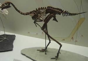 У пернатых динозавров обнаружили заболевание суставов