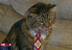 На место в Сенате США претендует кот