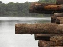 В Бразилии деревья оснастят микрочипами