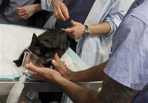 В США кошка стала донором почки