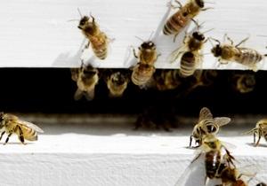 Офисное здание в Стокгольме атаковали тысячи пчел