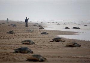 Ученые говорят об угрозе исчезновения морских черепах