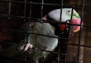 В  петербургском цирке-шапито произошел пожар: погибли более 50 животных