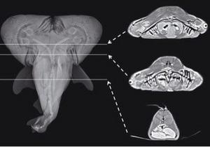 Новости США - странные новости: Американский рыбак поймал акулу с двумя головами