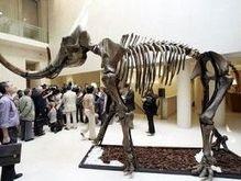 В Минске нашли останки мамонта