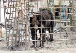 В частном хозяйстве под Киевом выявили нарушения содержания медведей