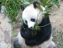 Ученые расшифровали генетический код бамбука