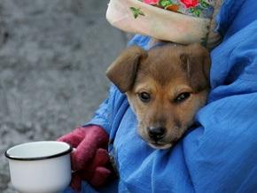 Власти хотят построить в Киеве второй приют для животных