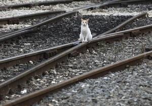 Составы киевских пригородных электричек сократили: поезда переполнены