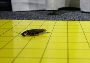 Китаец выпустил на свободу более миллиона медицинских тараканов