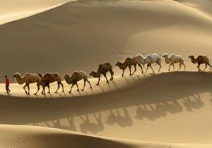 Российский крематорий купил верблюда для умиротворения посетителей